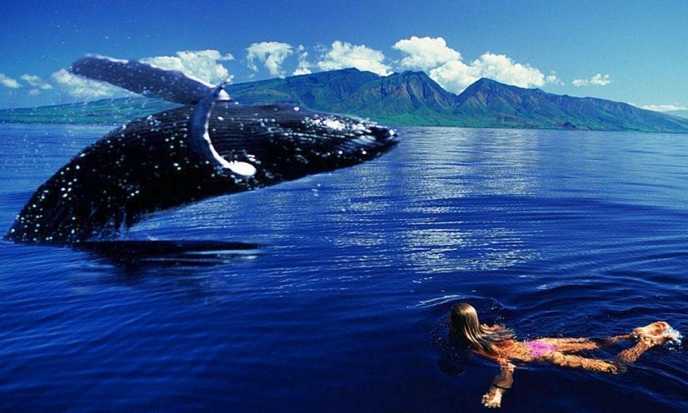 Maui Whale Festival